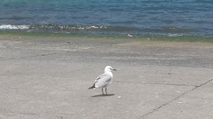 Hello, Seagull!