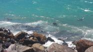 Swimming in the sun-warmed ocean waters