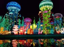 Underwater Wonderland 1