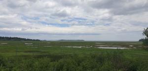 Irving Nature Park 1
