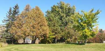 Autumn 12-min