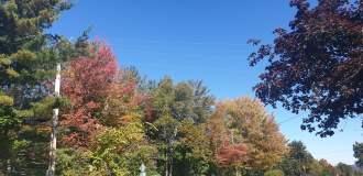 Autumn 3-min