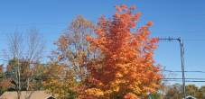 Autumn 5-min