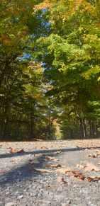 Autumn 6-min