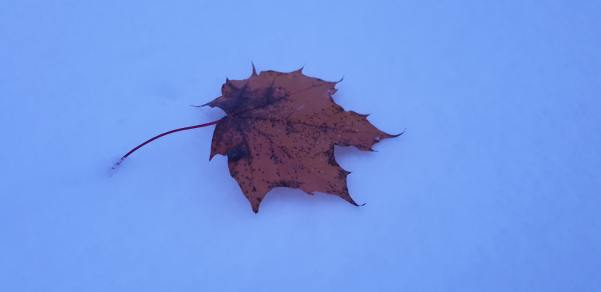 The last of the autumn leaves....